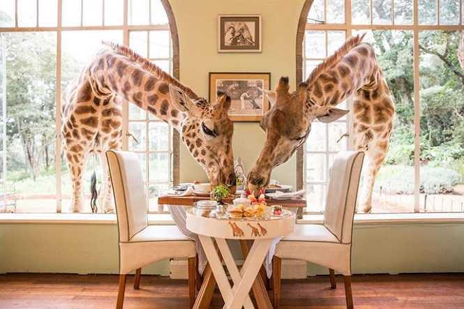 Giraffe Köşkü, Naorobi, Kenya