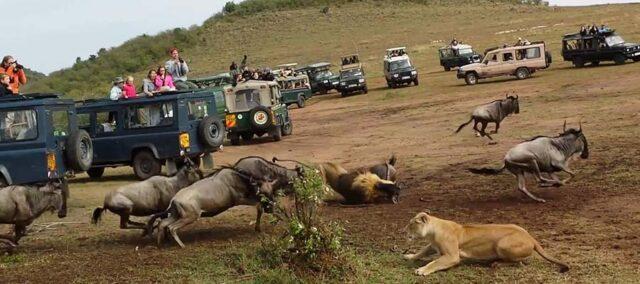 Afrika'da Safari Yerleri - Genel