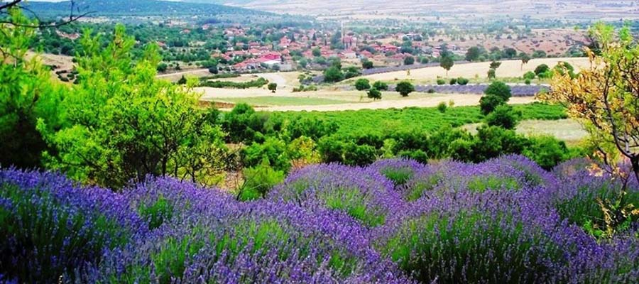 Kuyucak Köyü - Genel